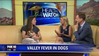 Valley fever in dogs treated with Fluconazole